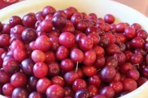 enduro-wild-plum-jelly-037p
